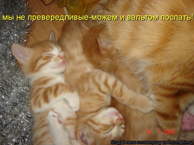 Котоматрица: мы не превередливые-можем и вальтом поспать!