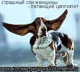 Котоматрица: страшный сон женщины - летающий целлюлит