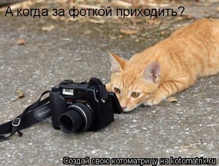 Котоматрица: А когда за фоткой приходить?