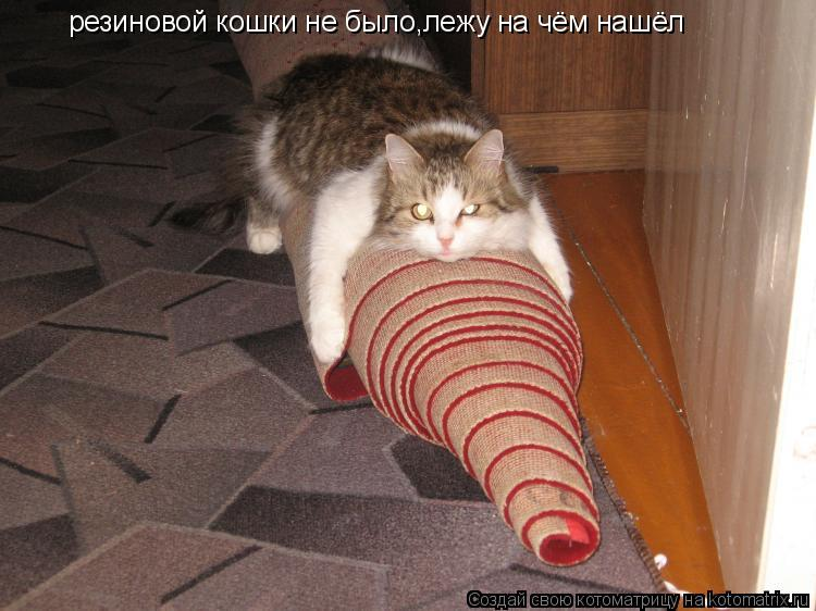 Котоматрица: резиновой кошки не было,лежу на чём нашёл