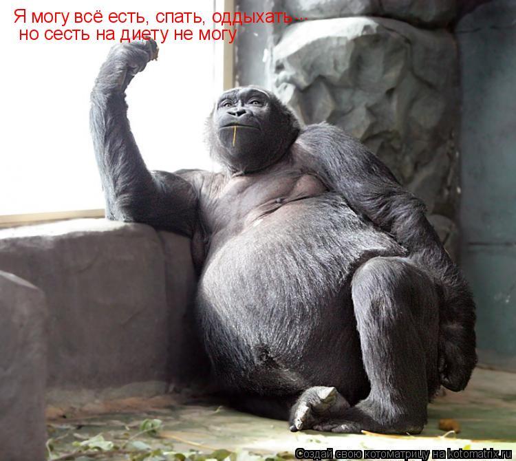 Котоматрица: Я могу всё есть, спать, оддыхать  но сесть на диету не могу ...