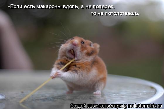 Котоматрица: -Если есть макароны вдоль, а не поперек,  то не потолстеешь.