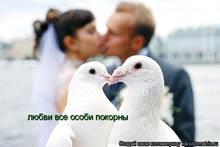 Котоматрица: любви все особи покорны