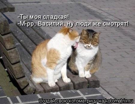 Котоматрица: -Ты моя сладкая! -М-рр, Василий, ну люди же смотрят!