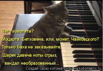 Котоматрица: Моцарта, Бетховена, или, может, Чайковского? Чего изволите? Только Баха не заказывайте,  Шарик давеча ноты сгрыз,  вандал необразованный...