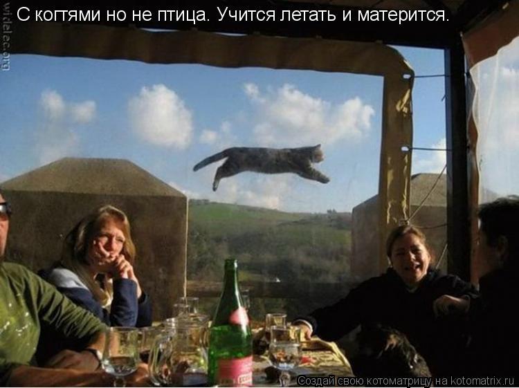 Котоматрица: С когтями но не птица. Учится летать и матерится.