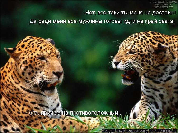 Котоматрица: -Нет, все-таки ты меня не достоин! Да ради меня все мужчины готовы идти на край света! - Ага, причем на противоположный..