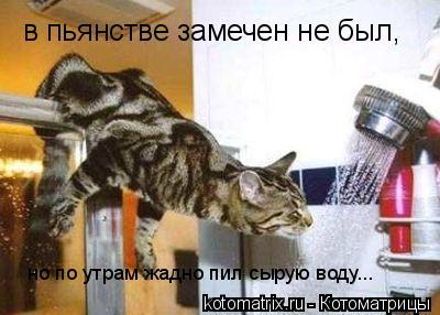 Котоматрица: в пьянстве замечен не был, но по утрам жадно пил сырую воду...
