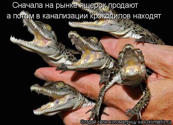 Котоматрица: Сначала на рынке ящерок продают а потом в канализации крокодилов находят