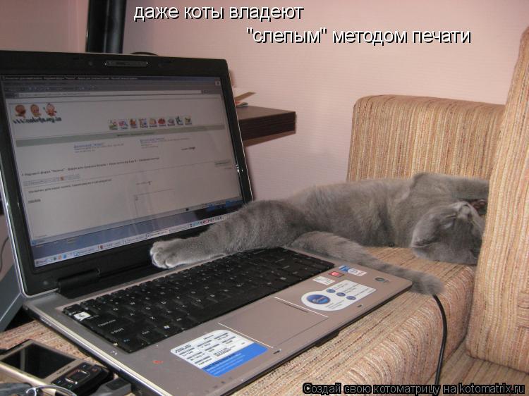 """Котоматрица: даже коты владеют """"слепым"""" методом печати"""