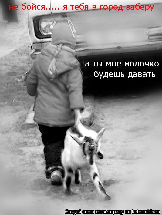 Котоматрица: не бойся..... я тебя в город заберу а ты мне молочко  будешь давать