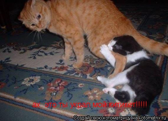 Котоматрица: ах  это ты украл мой китикет!!!!!