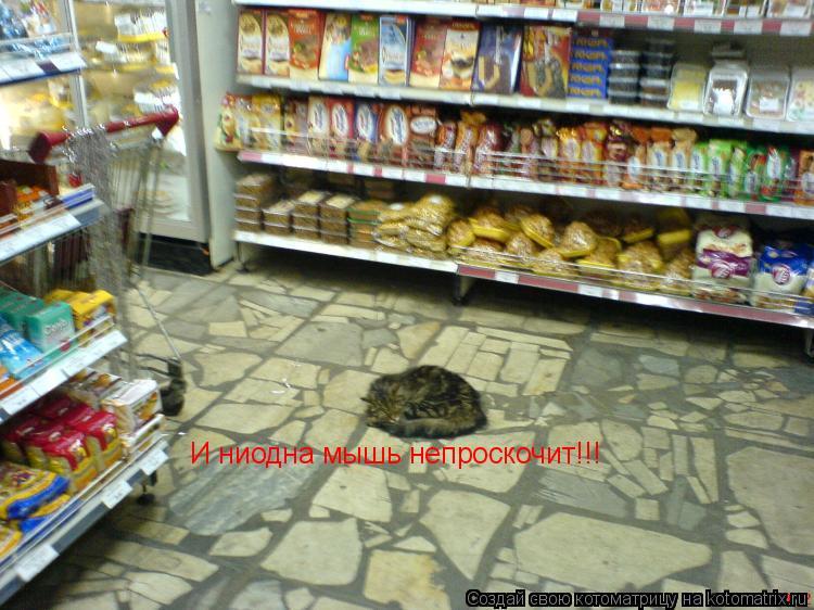 Котоматрица: И ниодна мышь непроскочит!!!