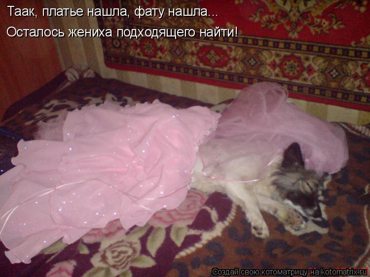 Котоматрица: Таак, платье нашла, фату нашла... Осталось жениха подходящего найти!