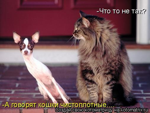 Котоматрица: -Что то не так? -А говорят кошки чистоплотные....