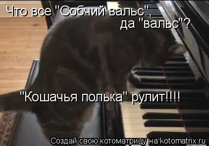 """Котоматрица: Что все """"Собчий вальс"""", Что все """"Собчий вальс"""", да """"вальс""""?  """"Кошачья полька"""" рулит!!!!"""
