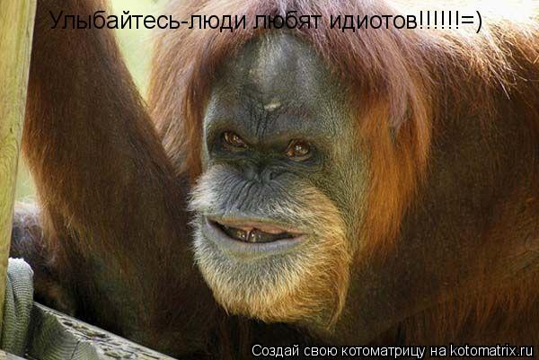Котоматрица: Улыбайтесь-люди любят идиотов!!!!!!=)