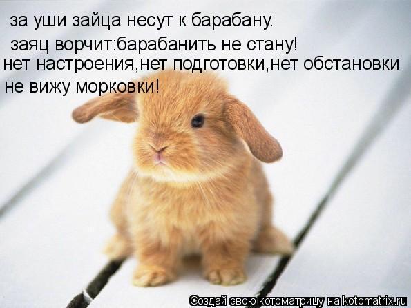 Котоматрица: за уши зайца несут к барабану. заяц ворчит:барабанить не стану! нет настроения,нет подготовки,нет обстановки не вижу морковки!