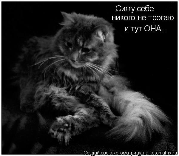 Котоматрица: Сижу себе  никого не трогаю и тут ОНА...