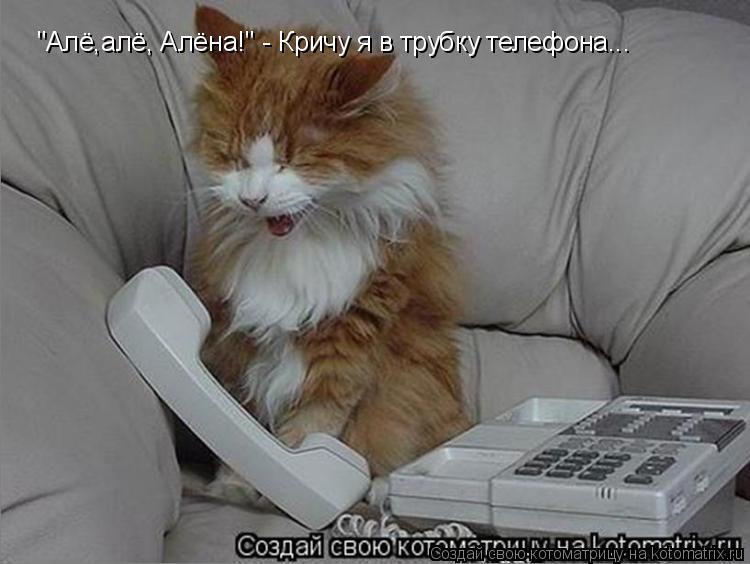 "Котоматрица: ""Алё,алё, Алёна!"" - Кричу я в трубку телефона..."