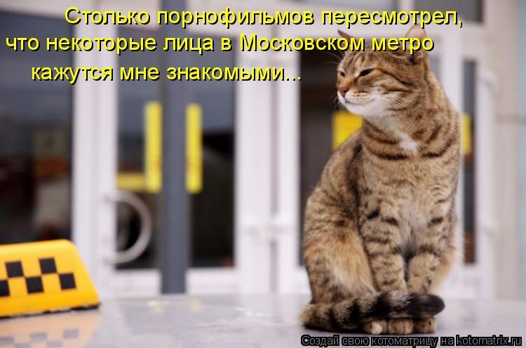 Котоматрица: Столько порнофильмов пересмотрел, что некоторые лица в Московском метро кажутся мне знакомыми...
