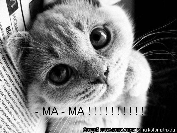 Котоматрица: - МА - МА ! ! ! ! ! ! ! ! ! ! !