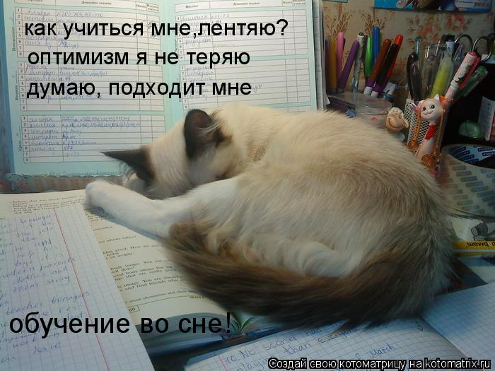Котоматрица: как учиться мне,лентяю? оптимизм я не теряю думаю, подходит мне обучение во сне!