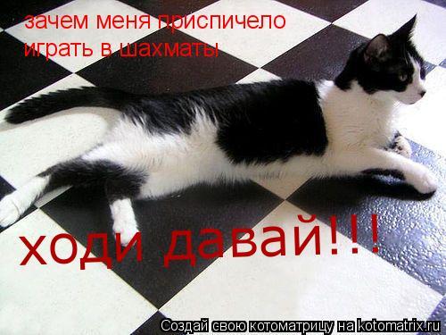 Котоматрица: зачем меня приспичело играть в шахматы ходи давай!!!