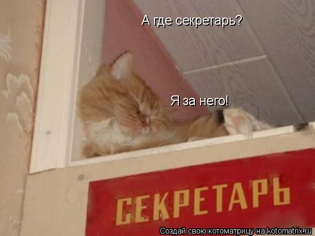 Котоматрица: А где секретарь? Я за него!