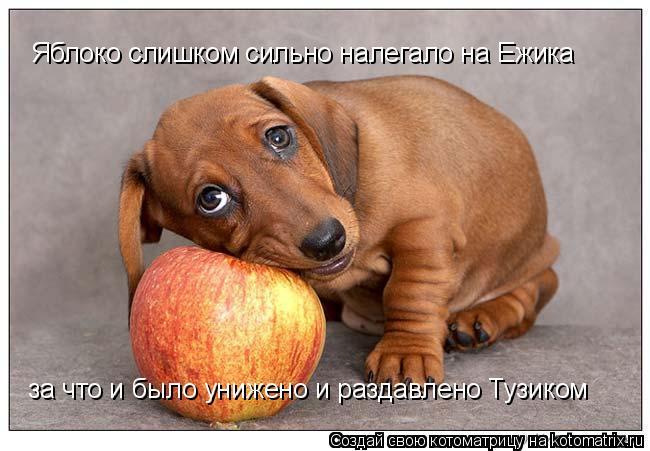 Котоматрица: Яблоко слишком сильно налегало на Ежика за что и было унижено и раздавлено Тузиком