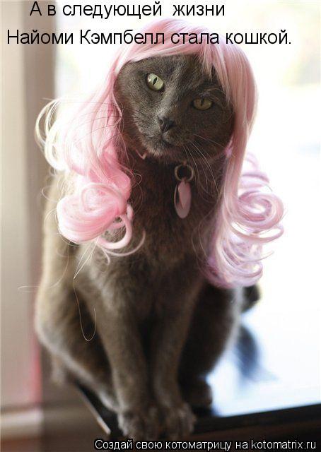 Котоматрица: А в следующей  жизни  Найоми Кэмпбелл стала кошкой.