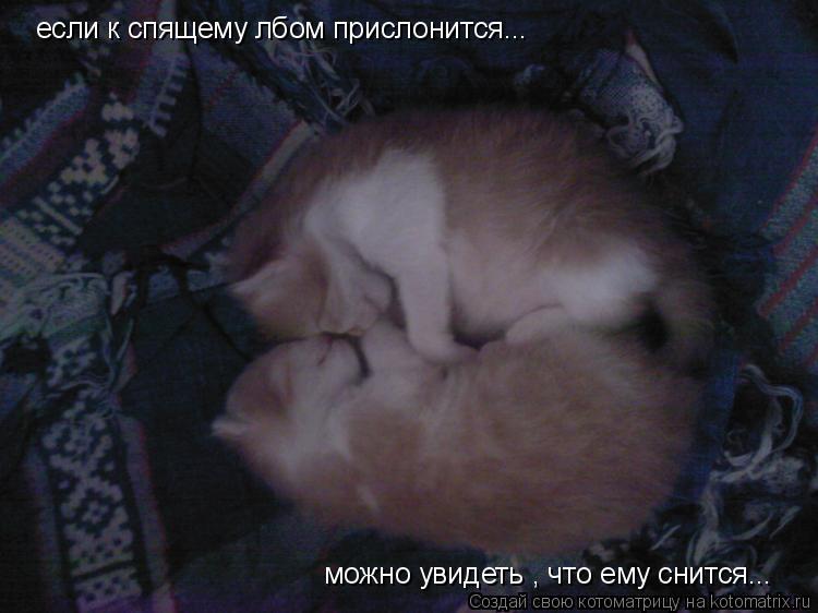 Котоматрица: если к спящему лбом прислонится... можно увидеть , что ему снится...