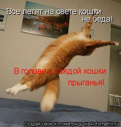 Котоматрица: Все летят на свете кошки не беда! В голове у каждой кошки  прыганья!