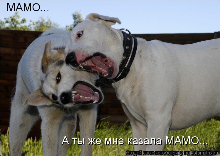 Котоматрица: МАМО... А ты же мне казала МАМО...