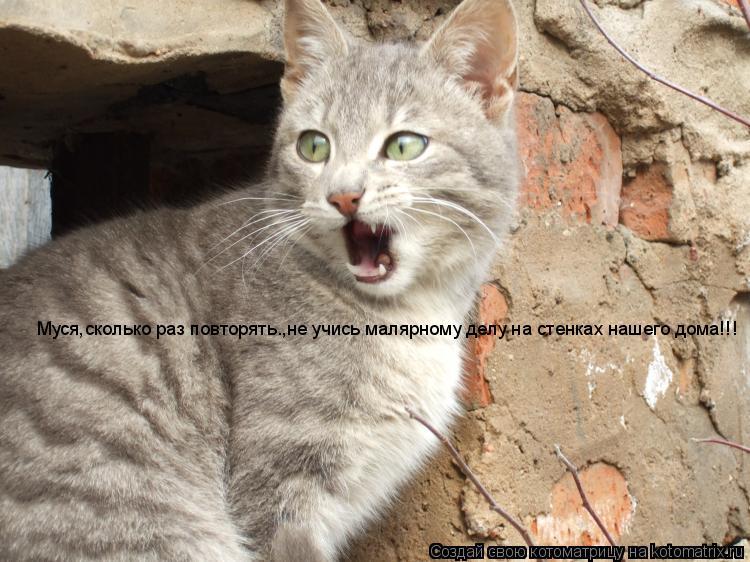 Котоматрица: Муся,сколько раз повторять.,не учись малярному делу на стенках нашего дома!!!