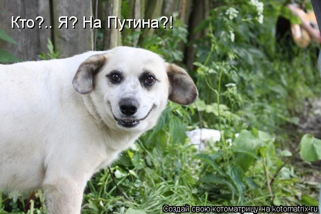 Котоматрица: Кто?.. Я? На Путина?!