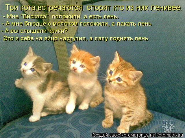 """Котоматрица: Три кота встречаются, спорят кто из них ленивее.  - Мне """"Вискаса""""  положили, а есть лень.  - А мне блюдце с молоком положили, а лакать лень - А вы с"""