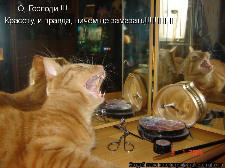 Котоматрица: О, Господи !!! Красоту, и правда, ничем не замазать!!!!!!!!!!!!