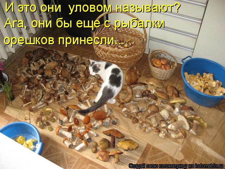 Котоматрица: И это они  уловом называют? Ага, они бы еще с рыбалки орешков принесли...