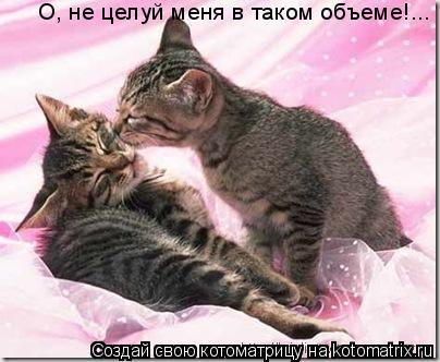 Котоматрица: О, не целуй меня в таком объеме!...