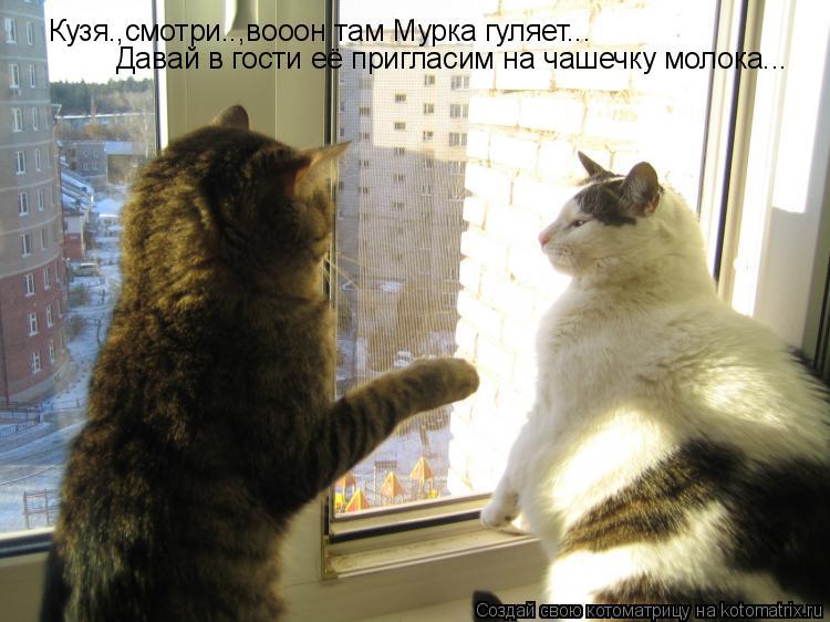 priglashu-v-gosti-muzhchinu