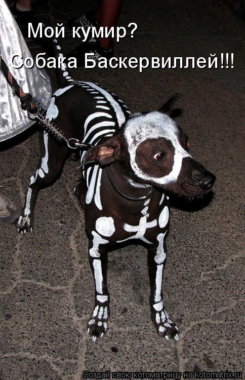 Котоматрица: Мой кумир? Мой кумир? Собака Баскервиллей!!!