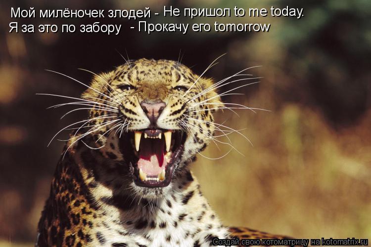 Котоматрица: Мой милёночек злодей -  Не пришол to me today. Я за это по забору  - Прокачу его tomorrow