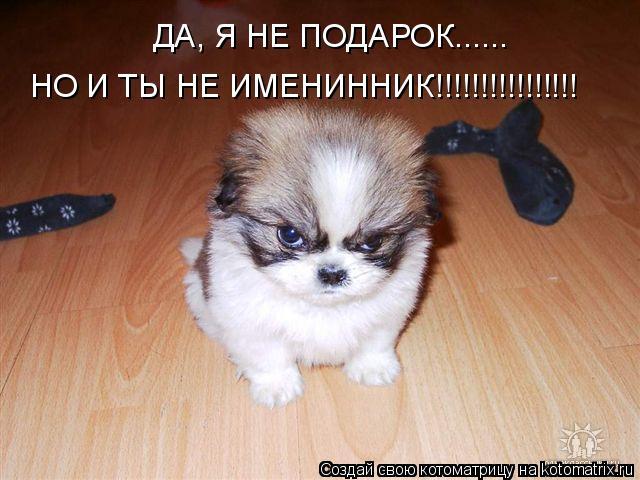 Котоматрица: ДА, Я НЕ ПОДАРОК...... НО И ТЫ НЕ ИМЕНИННИК!!!!!!!!!!!!!!!!