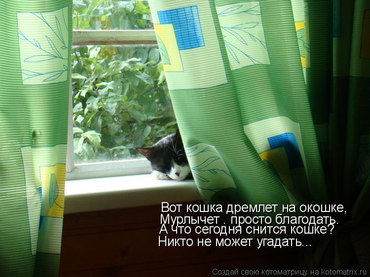 Котоматрица: Вот кошка дремлет на окошке,  Мурлычет – просто благодать.  Никто не может угадать... А что сегодня снится кошке?