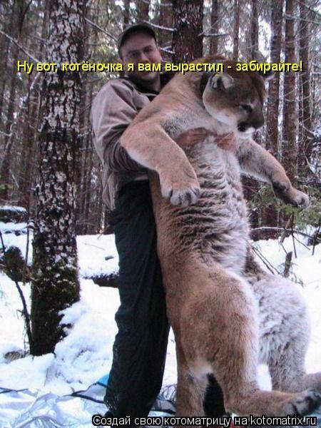 Котоматрица: Ну вот, котёночка я вам вырастил - забирайте!