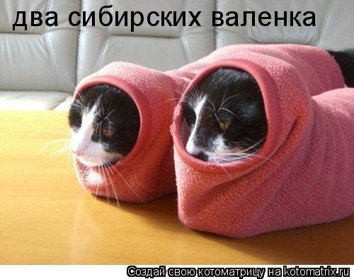 Котоматрица: два сибирских валенка