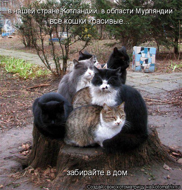 Котоматрица: в нашей стране Котландии, в области Мурляндии все кошки красивые... забирайте в дом