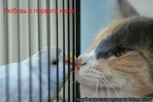 Котоматрица: Любовь с первого нюха...