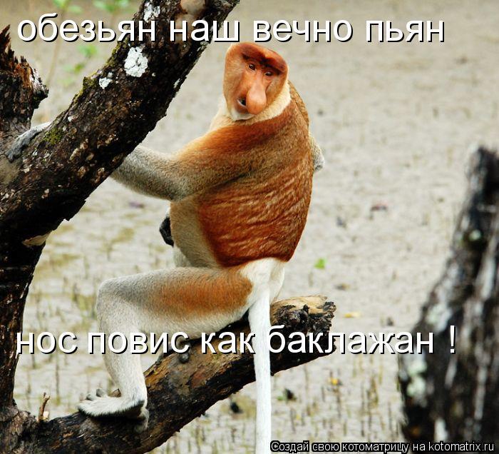 Котоматрица: обезьян наш вечно пьян нос повис как баклажан !